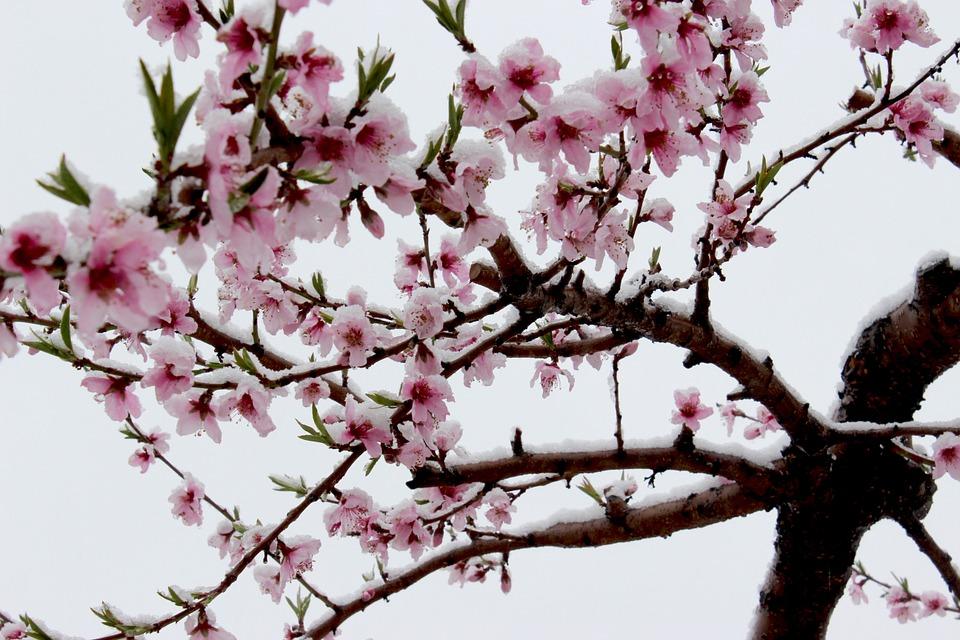 cherry-734389_960_720.jpg